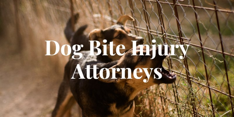 Springfield Dog Bite Lawyer